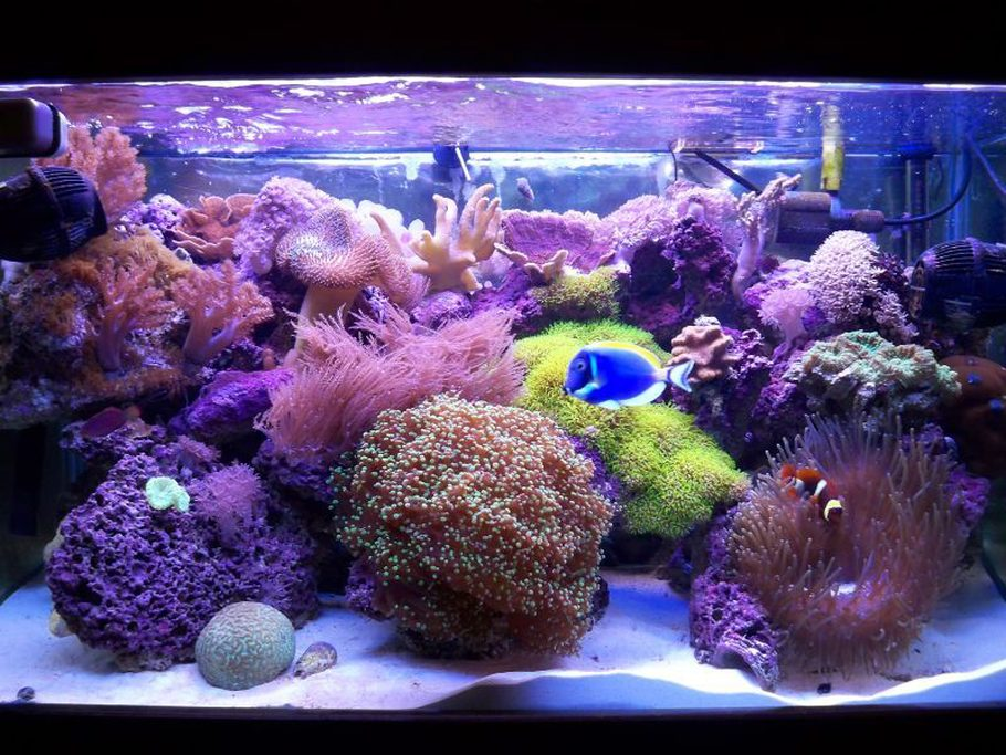 58-gal-mixed-reef-around-1-year-old--PdBbQW (1).jpg