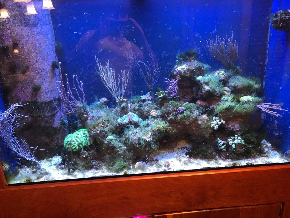 Display Tank Algae Mar 2018.jpg