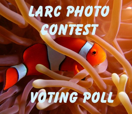 VotingPoll.jpg